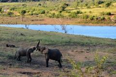 elephantssafari